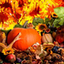 Праздник урожая «Дары осени»