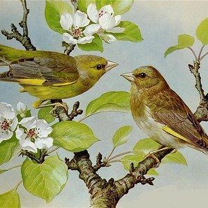 Программа «Птицы – наши друзья»