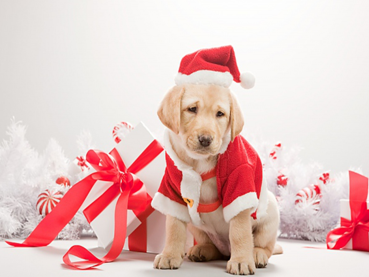 для картинки для года собаки первого