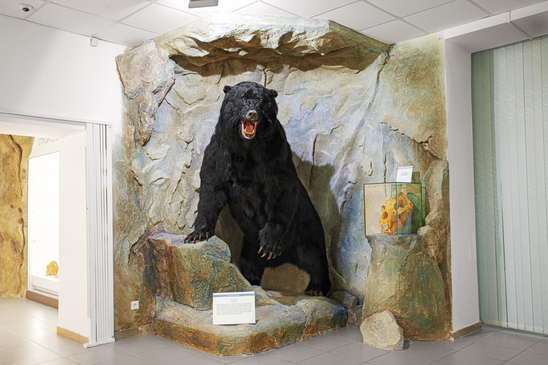Музей природы г. Новосибирск