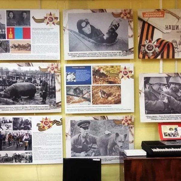 Выставка «Солдаты наши меньшие»