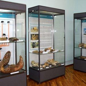 Выставка «Секреты Зубной феи»